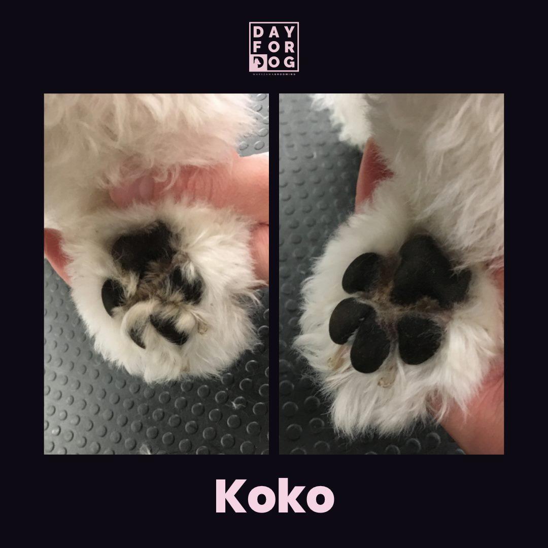 Kosmetyka łapek psa 1 grooming
