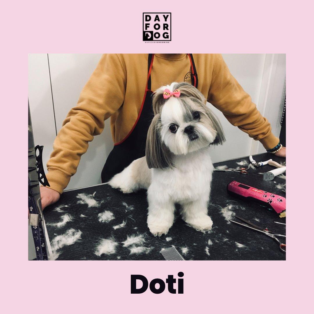 Strzyżenie psa 1 grooming